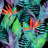 Tropical leaves seamless pattern. Floral design background. Stock Photos
