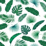 Tropical leaves seamless pattern. Vector green tropical leaves seamless pattern. Jungle exotic banana leaf, philodendron, areca palm and royal fern. Background Stock Photos