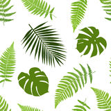 Tropical leaves seamless pattern. Vector illustration Royalty Free Stock Photos
