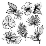 Tropical Leaves Set Royalty Free Stock Photos