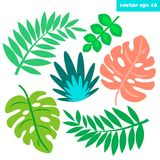 Tropical leaves set. Hand drawn colored tropical branches and leaves set. Spring or summer simple decorative elements for your designs. Vector isolated objects Royalty Free Stock Photos