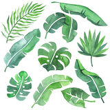 Tropical leaves set. Watercolor tropical leaves set. Beautiful watercolor painting of different leaves. Ideal for prints, wreaths and patterns. Isolated on white Royalty Free Stock Images