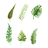Tropical leaves set Watercolor image. Set with tropical leaves Watercolor hand drawn image Royalty Free Stock Images