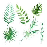 Tropical leaves set Watercolor image. Set with tropical leaves Watercolor hand drawn image Stock Photos