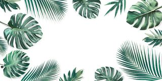 Tropical leaves set with white copy space background.Nature