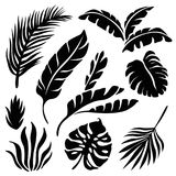 Tropical leaves silhouette set isolated on white background. Tropical leaves vector silhouette element set isolated on white background royalty free illustration