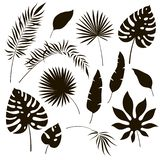 Tropical leaves silhouettes. Black jungle exotic leaf philodendron palm royal fern banana. Summer tropical illustration royalty free illustration