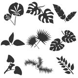 Tropical leaves silhouettes vector set isolated on white background. Different leaf collection. Jungle forest flora. Banana and exotic palm leaves in a flat Stock Photos
