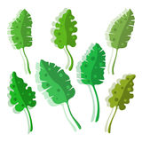 Tropical leaves stylized set with shadow Stock Photos