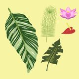 Tropical leaves summer green exotic jungle palm leaf nature plant botanical hawaii flora vector illustration. Royalty Free Stock Photography