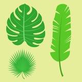 Tropical leaves summer jungle green palm leaf exotic design hawaii monstera botanical flora vector illustration. Decorative beach brazil tree foliage Stock Image