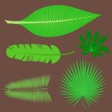 Tropical leaves summer jungle green palm leaf exotic design hawaii monstera botanical flora vector illustration. Decorative beach brazil tree foliage Royalty Free Stock Image