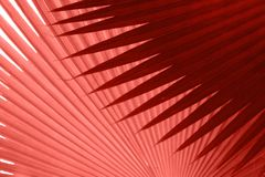 Tropical leaves texture in colour of the year 2019 Pantone - Living Coral. Beautiful tropical leaves texture in colour of the year 2019 Pantone - Living Coral royalty free stock photo