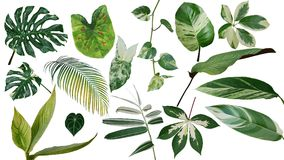 Tropical leaves variegated foliage exotic nature plants set isolated on white background, clipping path with plant common name in stock image
