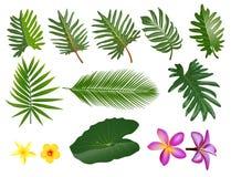 Tropical leaves set. Vector clip art illustration with simple gr. Tropical leaves. Vector clip art illustration with simple gradients. Each on a separate layer vector illustration