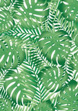 Tropical leaves Royalty Free Stock Photo