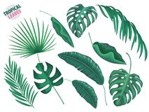 Tropical leaves vector realistic set. Tropical leaves, exotic fern, palm, mostrela in realistic style set. Summer holiday, vacation floral nature objects. Vector Royalty Free Stock Photo