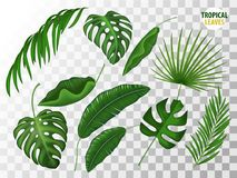 Tropical leaves vector realistic set. Tropical leaves, exotic fern, palm, mostrela in realistic style set. Summer holiday, vacation floral nature objects. Vector Royalty Free Stock Photos