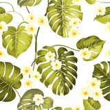 Tropical leaves vector set. Royalty Free Stock Photography