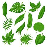 Tropical palm leaves set. Tropical leaves vector set on white background. Exotic palm, banana leaves in a flat cartoon style. Varied forms of the jungle forest Royalty Free Stock Photo