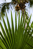 Tropical leaves view. From caribbean island Royalty Free Stock Photo