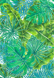 Tropical leaves watercolor Royalty Free Stock Images