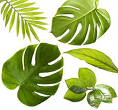 Tropical Leaves Royalty Free Stock Photography