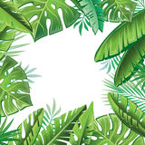 Tropical leaves Royalty Free Stock Images