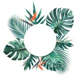 Tropical leaves with white copy space background.Nature and summer Stock Images