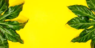 Tropical leaves on yellow background, flat lay, top view stock photos