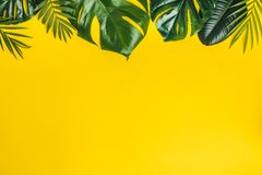 Tropical leaves on yellow background, space for text stock photo