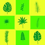 Tropical leaves on a yellow background royalty free illustration