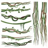 Tropical Liana Branches, Stems, Vines Set, Jungle Plants Decorative Elements, Rainforest Flora Vector Illustration. On White Background stock illustration