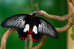 Tropical life. Tropical butterfly on the tree. Macro photography of nature Royalty Free Stock Photography