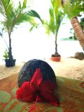Tropical life stock photos