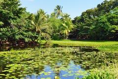 Tropical lilies on the lake Big Island of Hawaii Stock Photos