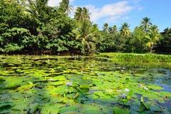 Tropical lilies on the lake Big Island of Hawaii Royalty Free Stock Photos