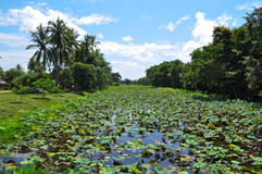Tropical lily pond Stock Images