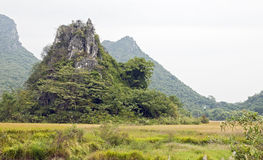 Tropical limestone karst. A small limestone karst shoots out of the flat rice fields in Guilin, China Stock Photos