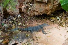 Tropical lizard on Railay beach Royalty Free Stock Image