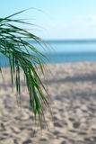 Tropical Beach Scene. A lone palm branch against a tropical backdrop of sand and blue ocean Stock Photos