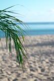 Tropical Stock Photos