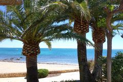 Palm Trees on a Mediterranean Beach royalty free stock photography