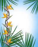 Tropical luau palms Background. Image and illustration composition for background, border, luau invitation or template with palm fronds and bird of paradise Royalty Free Stock Photo
