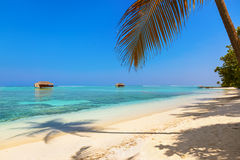 Tropical Maldives island Royalty Free Stock Photography