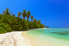 Tropical Maldives island Royalty Free Stock Photo