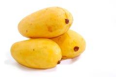 Tropical Mango Series 2 stock photography