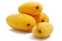 Tropical Mango Series 2 Royalty Free Stock Image