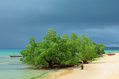 Tropical mangrove trees Stock Images