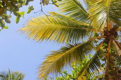 Tropical manner Royalty Free Stock Images